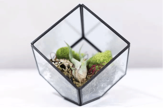 plantSquare