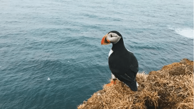 puffinWater
