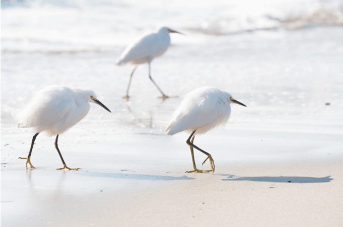 whiteBirds.PNG
