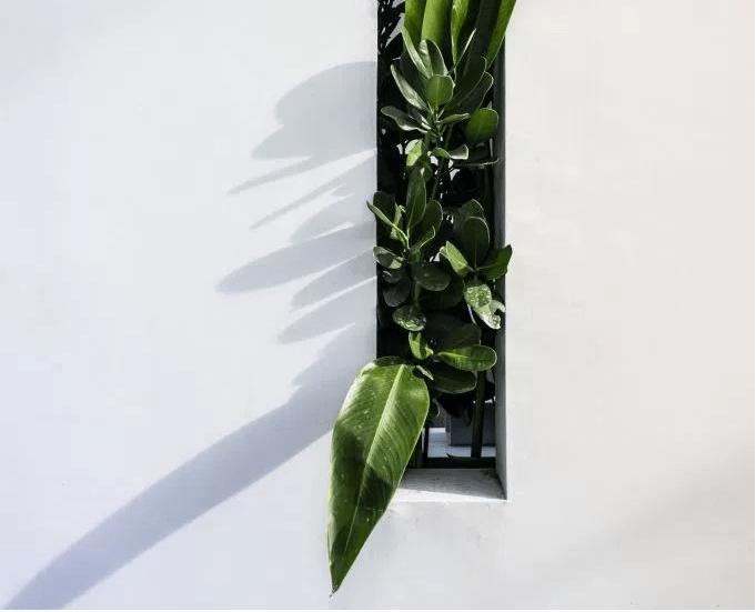 plantWhite.PNG