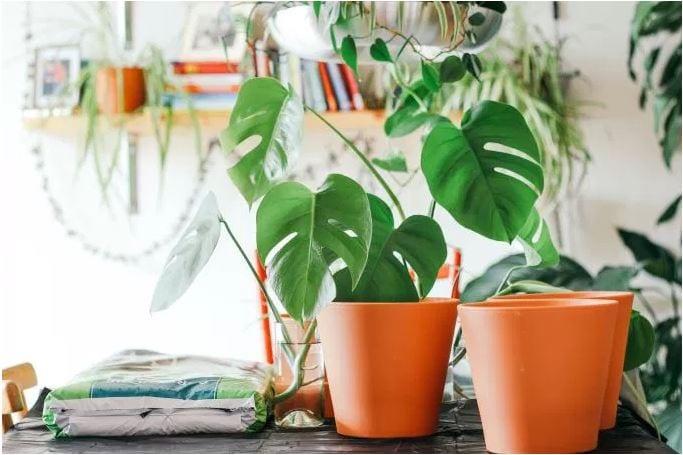 plantsPots.JPG