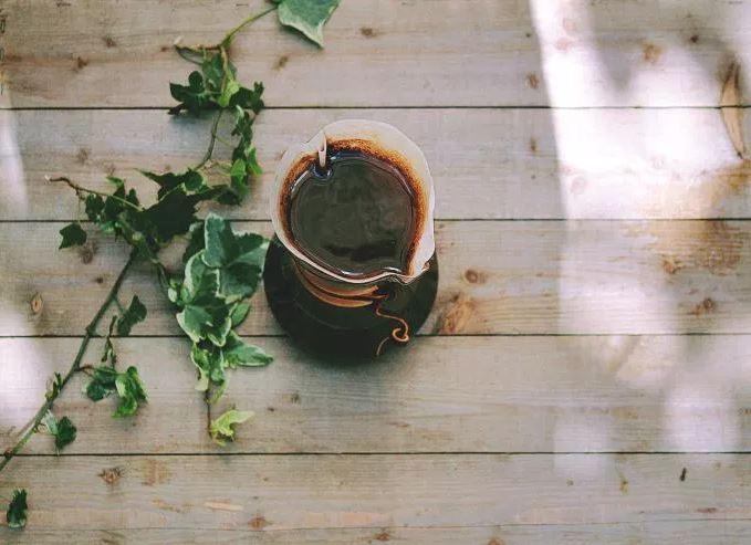 coffeeWoodPlant.JPG