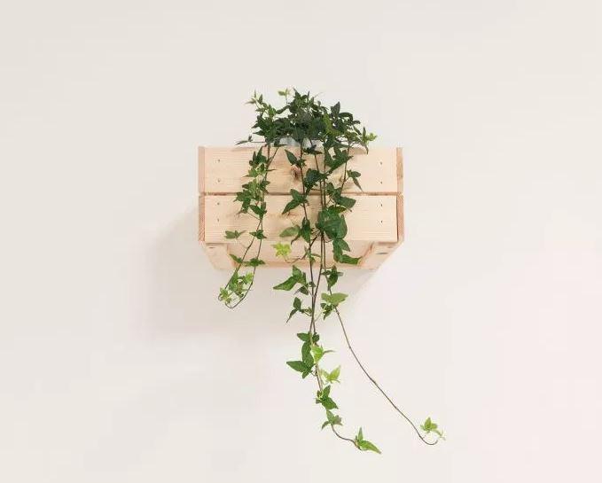 plantBox.JPG