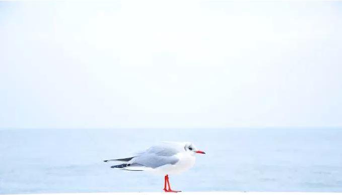 birdWhite.JPG