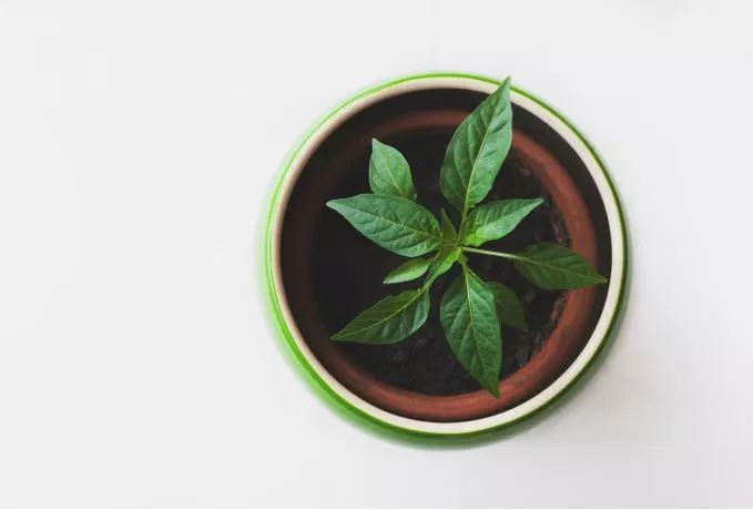 plantPotBrownWhite.JPG